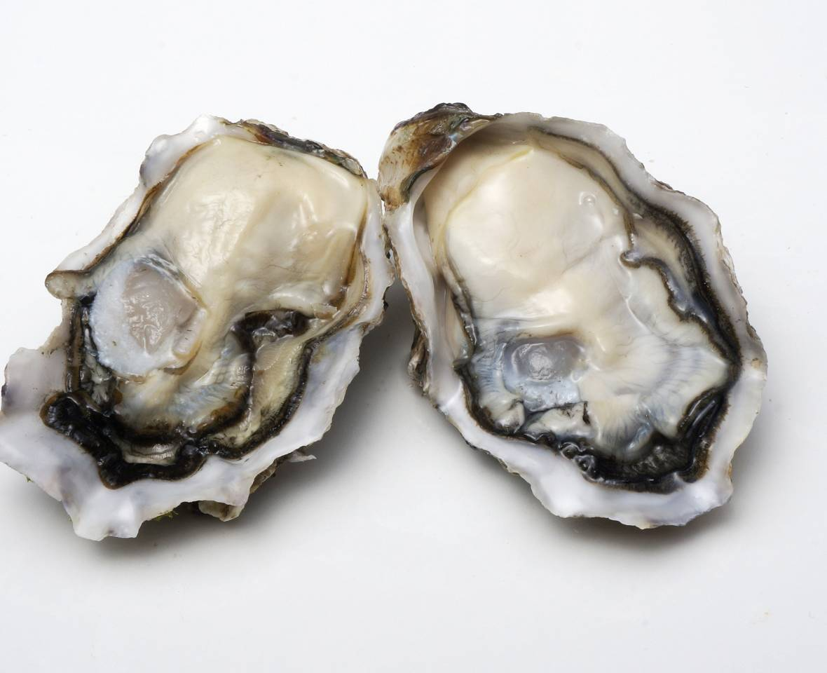 Clevedon Coast Oysters